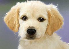 Τα σκυλιά επιτρέπονται;