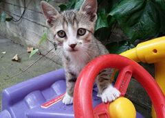 γατάκια στην αυλή