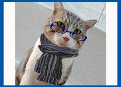 Γάτος με ρούχα και αξεσουάρ